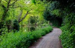 Walkpath aux voies d'eau dans Surrey Le printemps… a monté des feuilles, fond naturel photo libre de droits