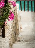 Walkpath through a flourishing seaside garden Stock Photos