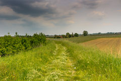 Walkpath in the green weeds Royalty Free Stock Photos