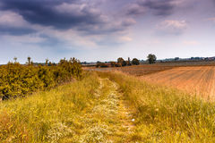 Walkpath in the green weeds Stock Photo