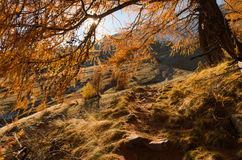 Walkpath i Mercantouren Royaltyfri Bild