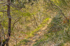 Walkpath in the trees. Sense of freedom following a walkpath in the trees, breathing pure air, perfume of the nature Royalty Free Stock Image