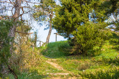 Walkpath in the trees Royalty Free Stock Image