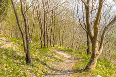 Walkpath in the trees Stock Image