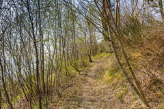 Walkpath in the trees Royalty Free Stock Images