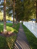 Walkpath between trees Stock Photo