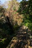 Walkpath y escaleras de piedra en jardín Foto de archivo libre de regalías