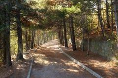 Walkroad в сосновом лесе с солнцем испускает лучи на Крыме Стоковое фото RF