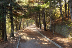 Walkroad in pine forest with sun beams at Crimea. Mountains Royalty Free Stock Photo