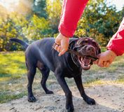 Walks in the Park with the dog. Man walks in the Park with the dog Royalty Free Stock Photography