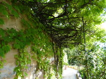Walkthrough in Alhambra spain Stock Photo
