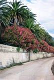 Walkup on the embankment of Herceg Novi, Montenegro Stock Photos