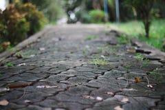 walkway arkivbilder