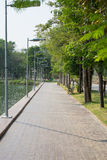 Walkway in alley garden. Avenue of trees in the park Royalty Free Stock Photos