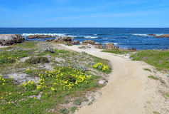 Walkway along the bluff overlooking Asilomar State beach in Paci. Walkway along the bluff with surf, rocks and early spring wildflowers at Asilomar State Beach Royalty Free Stock Photo