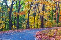 A walkway along deciduous trees in autumn. Stock Photos