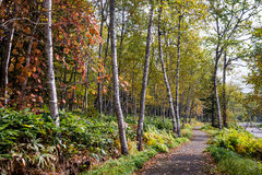 Walkway along the forest Stock Image