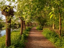 Walkway along the river Kromme Rijn in the Dutch province of Utrecht stock images