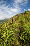 Walkway in the alpine grassland Stock Photography