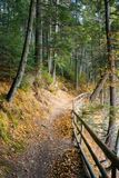 Walkway around lake of Synevyr National park. In autumn. fallen foliage and wooden fence along the path stock photos