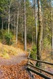 Walkway around lake of Synevyr National park. In autumn. fallen foliage and wooden fence along the path royalty free stock images