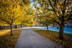 Walkway and autumn color at Franklin Square Park, in Baltimore, Stock Photo