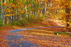 A walkway in autumn at The National Arboretum, Washington DC. Royalty Free Stock Photos