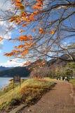 Walkway in autumn near Kawaguchi lake. Pedestrain walkway under row of tree in autumn near Kawaguchi lake (Kawaguchiko), Yamanashi prefecture, Japan royalty free stock images