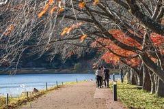 Walkway in autumn near Kawaguchi lake Stock Photos