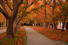 Walkway in autumn park Stock Images