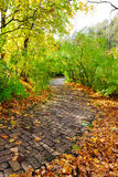 Walkway in autumn park Stock Photos