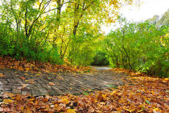 Walkway in autumn park Royalty Free Stock Photography