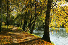 Walkway in autumn park near lake. Stock Photography