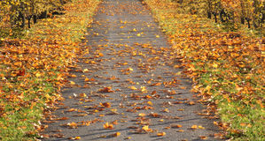 Walkway with autumnal leaves Stock Photo