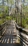 Walkway through the Bald Cypress trees. Wooden walkway over the swamp in First Landing State Park. Located in Virginia Beach, Va Stock Photo