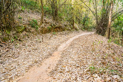 Walkway in the bamboo forest, Filled with fallen dry leaves on t Royalty Free Stock Images