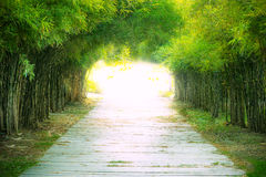 Walkway with bamboo forest. Stock Photo
