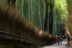 Bamboo Forest Walkway in Kyoto - Japan stock images
