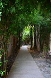 Walkway bamboo Royalty Free Stock Images
