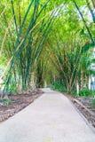 Walkway with bamboo Royalty Free Stock Photo