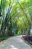 Walkway with bamboo Stock Photos