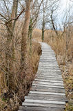 Walkway  in  bed of dry  common reed  in  marsh  in a wildlife reserve. Royalty Free Stock Photography