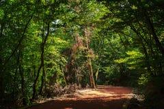 Walkway in Belgrade Forest Royalty Free Stock Image