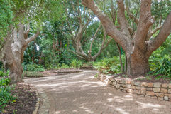 Walkway and bench in the  Kirstenbosch National Botanical Garden Stock Photo