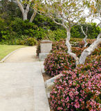 Walkway with blooming bushes along side. Laguna Beach trip Stock Image