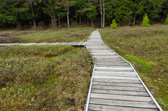 Walkway at Bog Royalty Free Stock Image