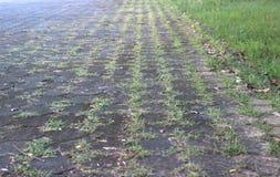 Walkway brick block. Walkway brick block have grass in public park Stock Photography