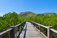 Walkway bridge through forest Stock Photos