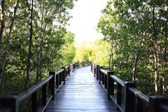 Walkway bridge in mangrove Pranburi, Prachuap Khiri Khan province, Thailand stock photos