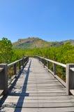 Walkway bridge through tropical forest Stock Photos